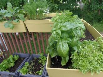 semez aux 2 semaines pour avoir de la verdure fraiche en tout temps