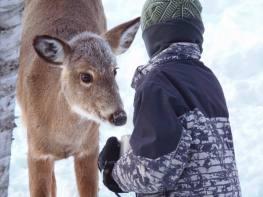 mon fils Raffaël qui offre des grains à un jeune cerf tout près de Labelle dans les Laurentides.