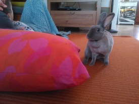 Béatrice lapin maison