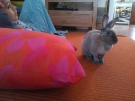 Béatrice lapin