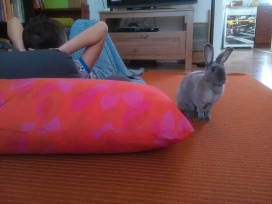 Béatrice bunny
