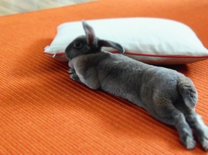 bunny relaxation